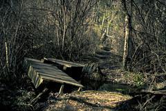 Bridge? (jayoaK) Tags: park bridge broken forest canon woods state dreary t3i parvin