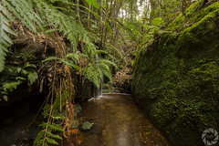 One More Creek (pradeep2471989) Tags: bushwalking grandcanyonwalk blackheath australia naturelandscape naturewalk hikingtrail landscapephotography