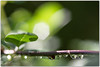 610_6818 (premdharma) Tags: nikond610 macro green makro plant leav