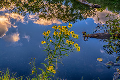 Flowers-and-Reflections (desouto) Tags: nature hdr landscape trees rivers sky clouds flowers reflections