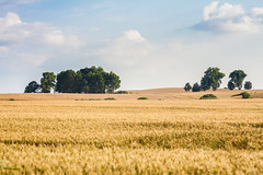 IMG_0970 (Sakuto) Tags: landscape field view poland europe eastcentraleurope clouds sky nature
