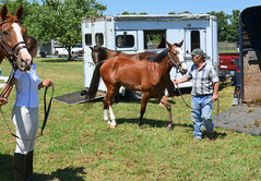 2016-08-28 (6) Miss Nicole arrives at 'horse show' (JLeeFleenor) Tags: photos photography md maryland horseshow gambrills horses thoroughbreds equine equestrian cheval cavalo cavallo cavall caballo pferd paard perd hevonen hest hestur cal kon konj beygir capall ceffyl cuddy yarraman faras alogo soos kuda uma pfeerd koin    hst     ko  trainers equinedentaltechnician