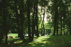 Peek (sofarsam) Tags: analog summer streetlight kodak 35mm europe estonia beauty vacation travel trees nature trip bliss nikon happy sky rays film filmphotography light