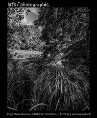 Pugh Dean Bottom (Art's Eye photographic) Tags: arborial lake rural bucolic freshwaterlake park parklandestate landscape nature trees woods coombe valley pughdeanbottom countryside arundel westsussex