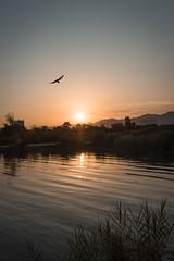 Rawal Lake (aliffc3) Tags: rawallake islamabad pakistan sunset sunsethour lake water reflections sun nikond750 tamron2470f28