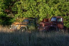 """That sun feels good, huh"" (garshna) Tags: trucks international gmc abandoned rusty relics sequim"