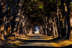 Cypress Tunnel (Tom Yamamoto) Tags: california point reyes national sea shore landscape marconi radio station cyprus tree tunnel