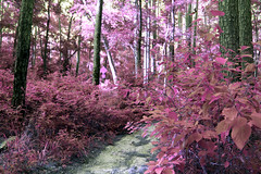 Chasing a ghost (someoneandthewhale) Tags: forest pink purple magenta plants fantasy unreal road lake trail exploring adventure other planet methane