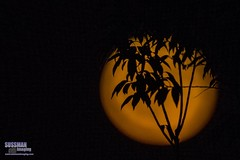 Harvest Moon (The Suss-Man (Mike)) Tags: fullmoon gainesville georgia hallcounty harvestmoon moon night nightphotography silhouette sonyslta77 sussmanimaging thesussman