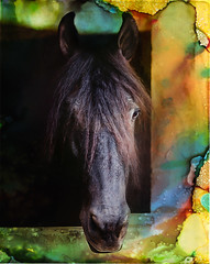 Color me silly (klick4) Tags: horse art color animals texture