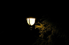 Have you ever tried to reach the light? (akigabo) Tags: montreal park campus streetlight lamp light tree branch night summer dark waiting contrast focus aquigabo canon eos rebel dsrl t5i 700d 250mm minimal details black composition