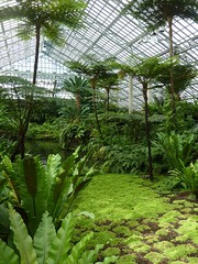 Chicago, Garfield Park Conservatory, Fern Room (Mary Warren (7.2+ Million Views)) Tags: chicago garfieldparkconservatory nature flora plants green leaves foliage pond water palmtrees glass lines