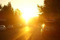 Untitled (Rabbit_128) Tags: sun flare cars street bright orange sunset city road oregon usa