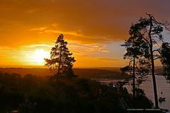 Solei (Leifskandsen) Tags: sunrise sunshine september oslo oslofjorden wood trees nature fjord sandvika camera canon living leifskandsen skandsenimages scandinavia