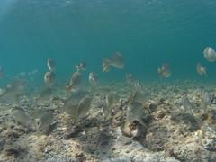 Cabo de Palos, under water (Sonia.Solano) Tags: snorkel snorkeling underwater buceo bajoelagua