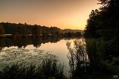 Morgenstund hat Gold im Mund (stein.anthony) Tags: canon sunset water wasser landschaft landscape natur nature see hamburg sonnenaufgang sunrise bume tree