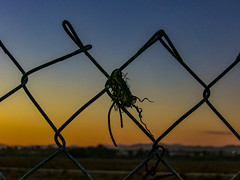 sittin' on the fence (MyArtistSoul) Tags: rippedout grommet chainlink fence pattern sunset yellow blue sky horizon city exterior outdoors simple minimal 1414 s100