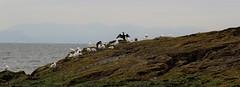 IMG_1957 (Leroy Wilson) Tags: fife eastneuk lowerlargo eile rubybay stmonans elienesslighthouse robinsoncrusoe juanfernandezisland pittenweem earlsferry scotland harbour boats lighthouse eos eos100d 70200mm