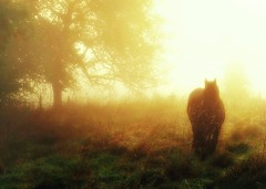 Ipaminandas (BphotoR) Tags: morning autumn trees horse oktober sunlight grass silhouette fog germany deutschland dawn october nebel hessen herbst oct gras dmmerung pferd odenwald morgendmmerung supershot mywinners abigfave anawesomeshot canonpowershotg10 weschnitztal bphotor blinkagain ipaminandas