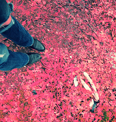 This Disembodiment (DeeAshley) Tags: california ca favorite usa digital canon landscape photography us photo yahoo blog google interesting flickr pretty solitude texas foto view unitedstates image random unique tx misc memories perspective creative scenic paisaje wanderlust adventure journey noedit vista variety dslr pastoral ontheroad infinite bing interesante nopostprocessing 2012 unedited iphone g11 g12 eeuu variedad colorswap noeditado gseries 2013 fotografia compflight canong11 gogoloopie deeashley dionneashley dionnehartnett mylovelymuse shehadpotential symmetryisperfection