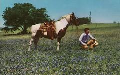 Bluebonnet Cowboy (Calsidyrose) Tags: horse rural vintage cowboy texas postcard bluebonnet countrylife ephemeraartillustrationgraphic