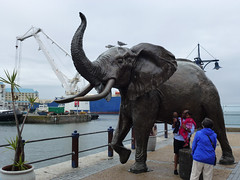 V&A Waterfront, Cape Town, South Africa, March 2013 (TyneWear-Rob) Tags: africa people sculpture elephant statue 30 bronze lumix march town waterfront african south panasonic southern va western cape 50 province 2013 nix75