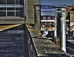 bird on a ledge (CeeJay Shots) Tags: traintracks tracks surreal railway railwaystation trainstation harrogate hdr hdri hyperreal harrogatenorthyorkshire