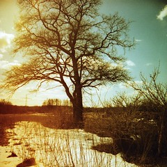 * (Der Ohlsen) Tags: schnee winter snow colour tree 120 6x6 film analog mediumformat germany square deutschland xpro slide mf dianaf tori baum schleswigholstein c41 lomographyslidexpro200