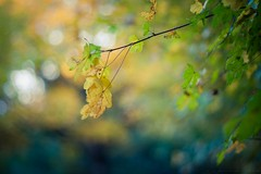 Sunshine (icemanphotos) Tags: leaf leaves autumn spring zen mood colors bokeh yellow naturallight icemanphotos canon
