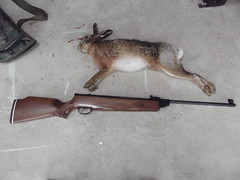 Sporting activities (Owen H R) Tags: set hare shoot hunting shooting sporting yourself challenge activities owenhr