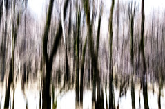 Nature (Abstract) #24 (Emmett Hunt) Tags: england abstract colour tree landscape lakedistrict explore 18105mm nikond300s