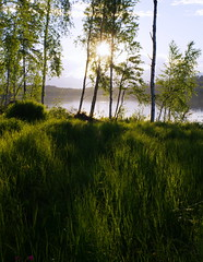 Sunstruck (Kalsjon) Tags: shadow summer sun lake green water grass landscape pentax sweden birch jmtland nordiclight