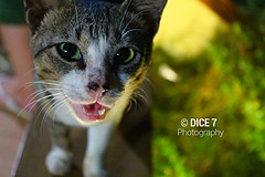 Meow (Dice7 Photography) Tags: green animal cat living model feline ramp thing nine philippines meow lives runway pusa organism miming pagadiancity zamboangadelsur