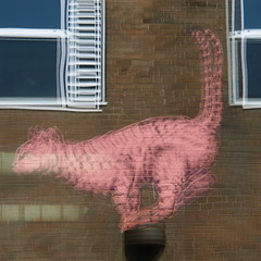 Carnet de route 2 - Chats des artistes (_ Adèle _) Tags: streetart montréal québec roadsworth reflets fresque carnetderoute unephotoparjour