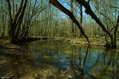 Ruisseau de la Clauge - Fort de Chaux (francky25) Tags: de la tokina pro f28 fort vieille atx ruisseau comt franche chaux loye 1116mm clauge