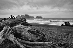 Driftwood (Denzil Burriss) Tags: travel november vacation blackandwhite bw beach canon washington northwest olympicpeninsula driftwood dslr 2012 seattlearea 5d3 5diii