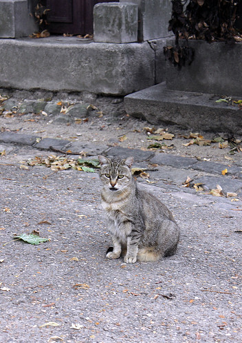 Nameless cemetery cat - one of hundreds at the Montmartre graveyard