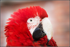 show park red pet hot bird eye fly flying bright pentax vibrant sheffield small beak feathers parrot cage sharp tropical colored captive