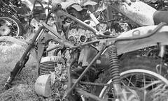 Motorcycle Junkyard (bcgreeneiv) Tags: blackandwhite bw film graveyard olympus xp2 motorcycle yamaha junkyard wreck scrap ilford enduro om2n