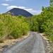 Il percorso per il Cerro Negro che già sbuca dalla boscaglia