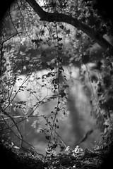 Зеркало (Timoleon Vieta II) Tags: light shadow portrait bw love home glass beauty river landscape mirror spring peace natural rip perspective running harmony memory mayday rintin зеркало timoleon