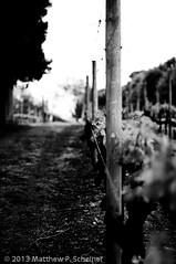2013-05-19 Wineries Low Res-26 (matthewscheiner) Tags: island long wineries 20130519