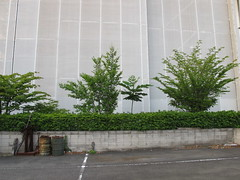 paradise is closed (Samm Bennett) Tags: plant tree japan tokyo parking wrapped covered shrouded