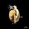 The dark side of the nut (Explored) (bgspix) Tags: food fruit canon fun photography milk sunday nuts drop lait nut splash milky darkside noix strobist sundayphotography