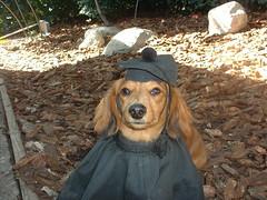 "David Slades dog Django • <a style=""font-size:0.8em;"" href=""http://www.flickr.com/photos/95808399@N03/8984268608/"" target=""_blank"">View on Flickr</a>"