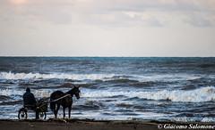 Un altra passeggiata.. (JackTorva) Tags: blue sea sky italy horse beach canon rebel surf italia mare blu cielo inverno colori cavallo spiaggia lazio onde biga torvaianica xti 400d