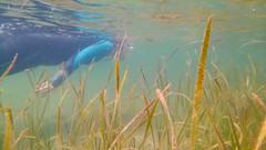 KIMG0018.jpg (d3_plus) Tags:  drive fish  apnea izu sea smartphone j4  underwater   watersports hokurikuregion android  japan notojimaisland dolphin kyocera scenery torqueg02   au skindiving       snorkeling seaofjapan dolphinswim fishingport diving   marinesports kyv35  ishikawapref  sky   port