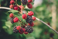yummy (Olya Ovs) Tags: blackberry summer village