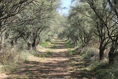 Sentiero (RosaLuna1311) Tags: ravenna sentiero