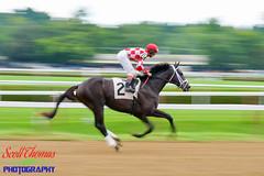 Warming Up at Saratoga (Scottwdw) Tags: track blur newyork saratoga tail running racecourse horses red thoroughbred silks saddle motion jockey helmet two bridle panning mane sports racing saratogasprings unitedstatesofamerica 840